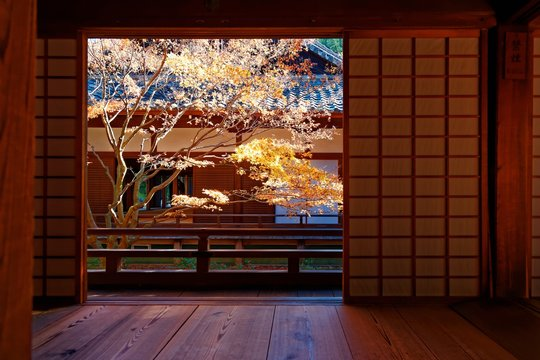 Scenic view of a colorful maple tree in the courtyard garden behind the sliding screen doors ( shoji ) of a traditional Japanese architecture in a free entry, public park in Kyoto, Japan