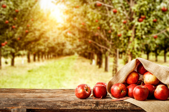 Fresh red apples on wooden board and blurred background of trees. Autumn time