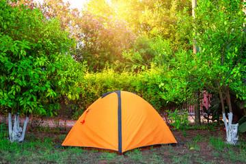 Orange tent among orange trees under the bright sun