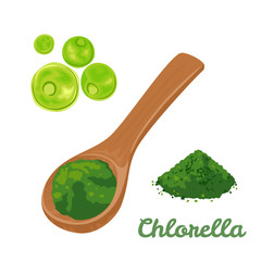 Chlorella green algae. Chlorella superfood powder in wooden spoon Isolated on white background. Vector illustration of dietary seaweed supplementation in cartoon flat simple style.