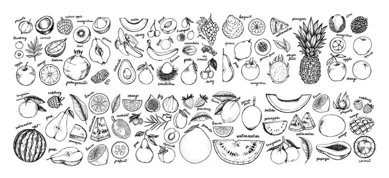 Hand drawn vector illustration - Collection of tropical and exotic Fruits. Healthy food elements. Apple, orange, papaya, coconut, mango, pear etc. Perfect for menu, packing, advertising, cooking book.