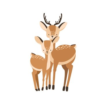 Deer with fawn isolated on white background. Family of wild forest herbivorous animals. Chital parent with child or youngling, mother or father and baby. Flat cartoon childish vector illustration.