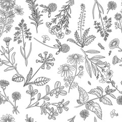 Herbs pattern. Medical plants flowers and herbs nature extracts vector seamless background. Floral medical, natural pattern extract illustration