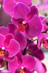 beautiful purple Orchid flowers close up