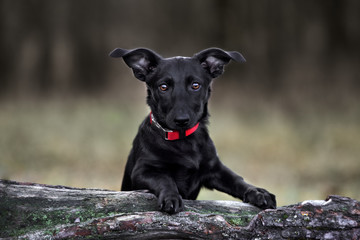 mixed breed dog portrait outdoors