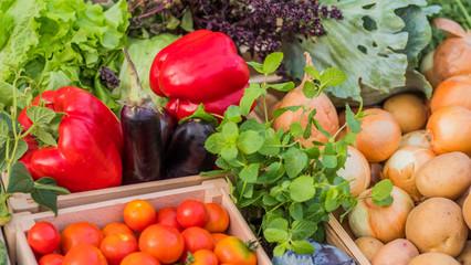 Fototapeta Set of seasonal vegetables on the counter of the farmers market. obraz