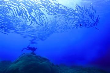 沖縄宮古島の海中のカマスの大群とダイバー