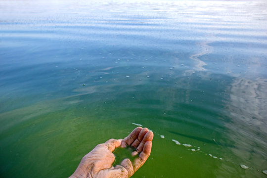 Human hand polluted with blue-green algae. Water pollution by blooming Cyanobacteria is world environmental problem. Ecology concept of polluted nature.
