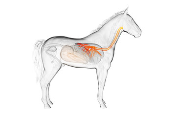 3d rendered medically accurate illustration of a horses bronchi