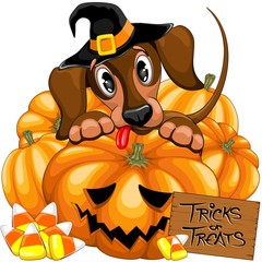 Tuinposter Draw Halloween Dachshund Cute with Jack o Lantern and Candies vector illustrations