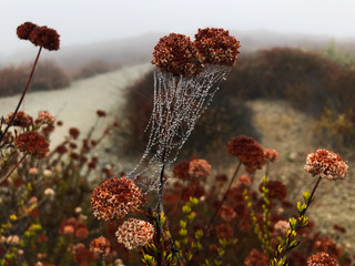 Drops of dew sit on a spider web in the early morning mist in Los Angeles