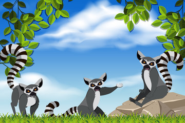 Raccoons in nature scene