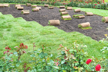 laying turf to create the green lawn in city park