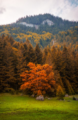 Autumn Landscape with Forest and Orange Colored Tree under Rocky Ohniste Hill in Slovakia