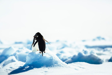 Adelie Penguins on snowy landscape