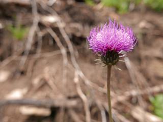 immagine rurale di fiori assolati in campagna