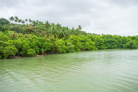 Lush Atlantic Forest by the Santa Cruz canal on Itamaraca Island - Brazil