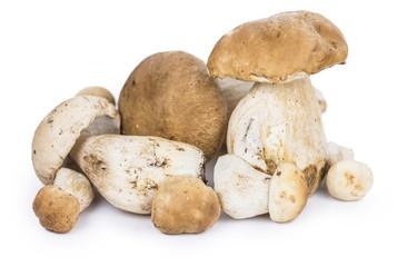 Fresh Porcinis (raw) isolated on white