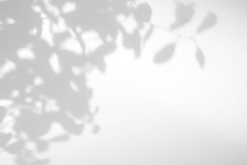 Gray shadow of the leaves on a white wall. Abstract neutral nature concept blurred background. Space for text. Overlay effect for photos and mockups.