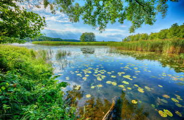 Wall Murals Water lilies Beautiful summer day on masuria lake district in Poland