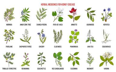 Best herbs for kidney disease Wall mural