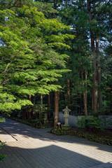 新潟 弥彦神社 新緑の参道風景