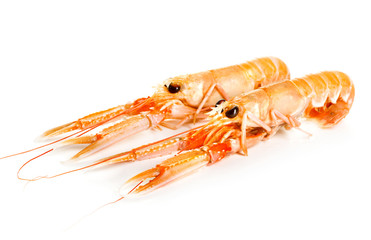 Norway lobsters isolated on white background