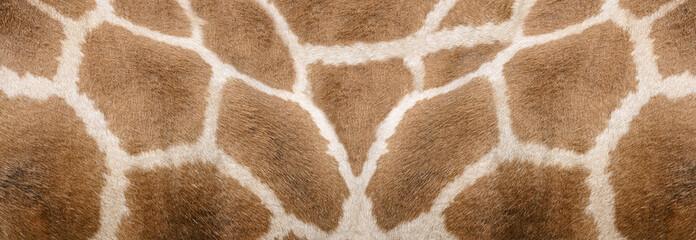 Giraffe skin Texture - Image 1
