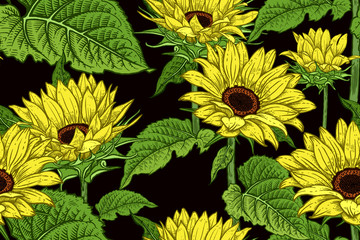 Floral seamless pattern with blooming Sunflowers.