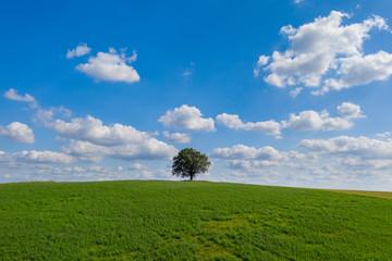 Einzelner Baum auf einem Hügel in der Uckermark, Brandenburg