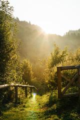 Zejście w głab lasu - Wschód Słońca