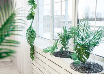 Window with tropical leaves and greenary monstera huge big leaves