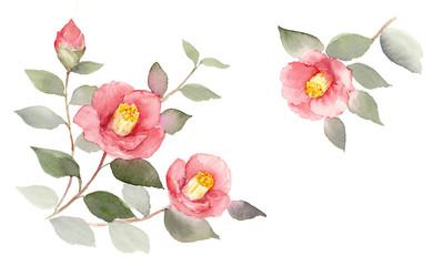 椿 水彩画
