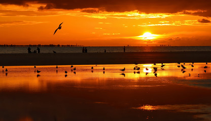 Birds and people enjoy the sunset on Fort Myers Beach, Florida, USA.