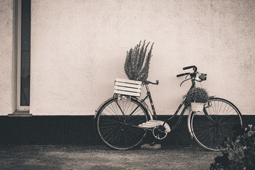 vintage bike, used as decoration to put plants, supported by white wall with red stripe, with copy space