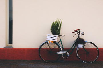 Fotobehang Fiets vintage bike, used as decoration to put plants, supported by white wall with red stripe, with copy space