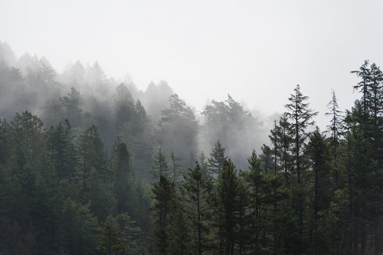 Foggy tree landscape of the Pacific Northwest, North America
