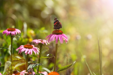 Butterfly pollinating wildflowers in the summer meadow