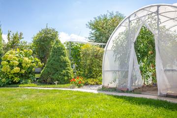 Fototapeta greenhouse with vegetables in private garden in back yard obraz