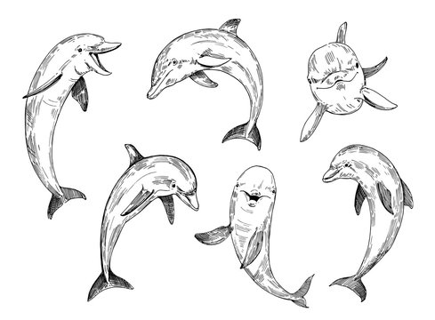 Dolphin sketch. Hand drawn illustration converted to vector.
