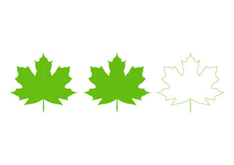 A collection of vector Canadian maple leaf icons. Silhouette of autumn leaves icon set isolated on white background