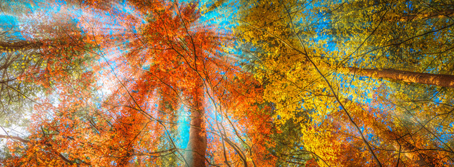 Foto op Plexiglas Herfst multi colour trees in the autumn forest