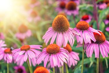 Obraz Garden of beautiful colorful flowers - fototapety do salonu