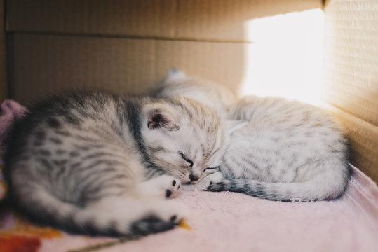 Tiny cuddling kittens in box