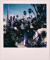 Large Cacti Outside California Home Shot on Polaroid
