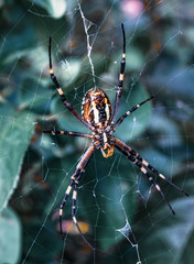 spider with web on the nature garden, wild animal
