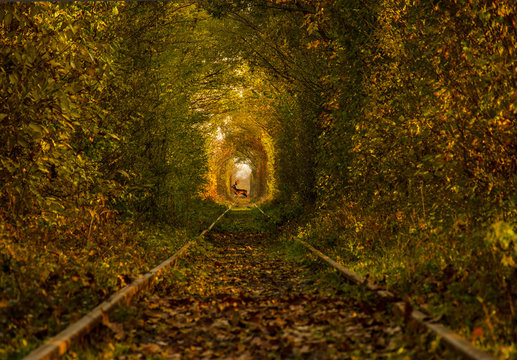 The tunnel of love, a green and natural tunnel formed by trees along a railway  in Obreja, Caras Severin County, Romania