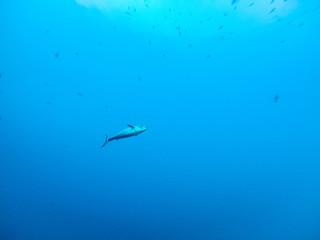 ダイビング 水中写真
