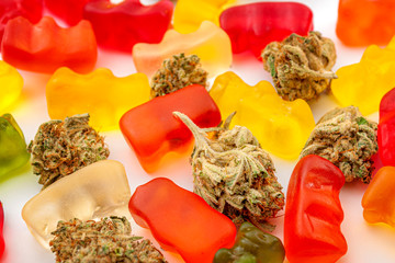 Fototapeta Cannabis edibles, medical marijuana, CBD infused gummies and edible pot concept theme with close up on colorful gummy bears and weed buds on white background obraz