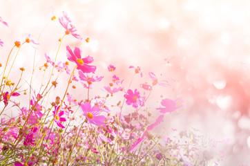 Recess Fitting Universe blurred of cosmos flowers with bokeh in vintage style and soft blur for background